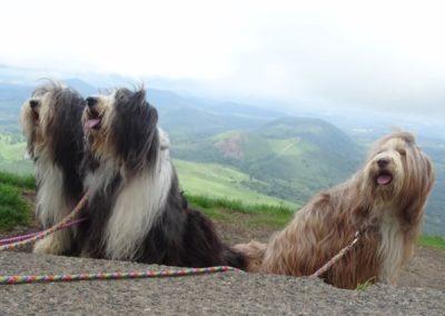3 chiens sur le Puy de Dôme