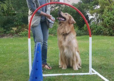 Hond op speelveld bij poortje