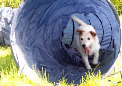 Hond op speelveld door slurf