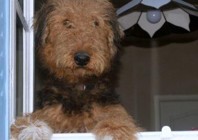 Le chien Foppe au gîte Sioullet