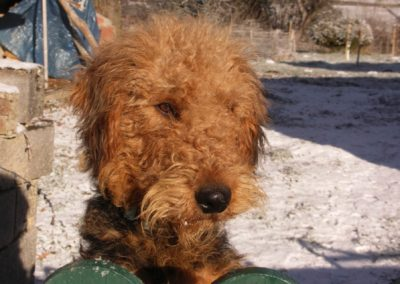 Hond Foppe in de zon