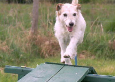 Hond op speelveld over kattenloop
